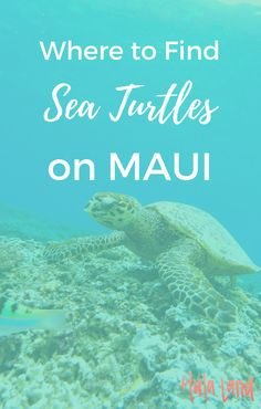 Best Maui Snorkeling Spots (+ Where to Find Sea Turtles) - Hulaland