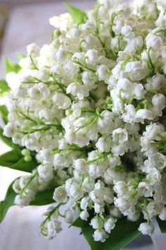 Lily of the valley. Reminds me of my sweet #beagle girls who used to lay in my lily of the valley.  #OutdoorGardening