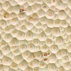 Falena Wood Panels Image