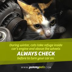 WARNING : During winter, cats take refuge inside car's engine and about the wheels. PLEASE ALWAYS CHECK before to turn your car on. #cat #car #winter #kitten #animals #warning #help #life #die #bad #news #pets