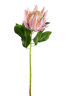 Beautiful pink artificial tropical wedding flowers are found in this dusty pink fake king protea flower. Its exotic look is the perfect way to give your DIY bridal flower bouquet that one-of-a-kind detail. Wedding Ceremony Flowers, Bridal Flowers, Flower Bouquet Wedding, Protea Bouquet, Protea Flower, Plastic Flowers, Bulb Flowers, Potted Flowers, Exotic Flowers