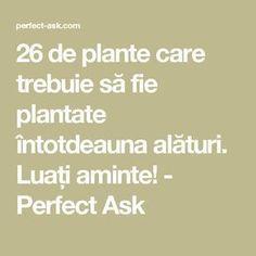 26 de plante care trebuie să fie plantate întotdeauna alături. Luați aminte! - Perfect Ask Wisteria, Health Fitness, Landscaping, Gardening, House, Decor, Gardens, Permaculture, Plant