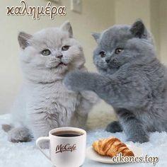 Πανέμορφα γατάκια σας λένε όμορφες καλημέρες! - eikones top Cats, Animals, Happy Thursday, Gatos, Animales, Animaux, Animal, Cat, Animais