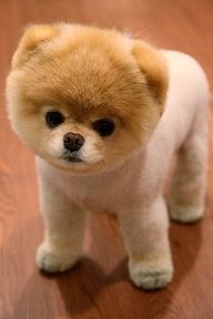 the cutest dog ever it has to be!