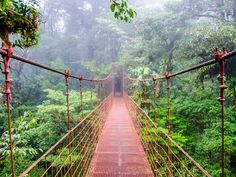forest - Google Search Costa Rica Reisen, Costa Rica Travel, Monteverde, Marriott Vacation Club, Beautiful Forest, Beautiful Places, Varadero, Lonely Planet, Natural Wonders