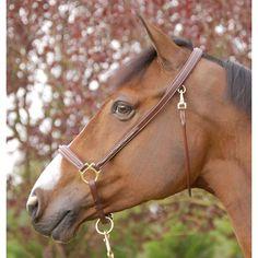 Groominggrimma - mönstersöm - Häst