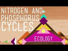 Nitrogen & Phosphorus Cycles: Always Recycle! Part 2 - Crash Course Ecology #9 - YouTube