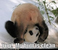 Funny Husky Pictures with Captions   ... Internet's Animals. Captioned - Funny Animal Captions - Cheezburger
