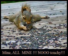 Squirrel love :)