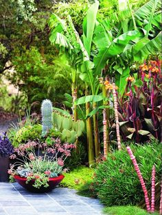 """Garden designer Davis Dalbok and an East Coast transplant respect a classic Joseph Eichler bungalow and complete the vision of """"living in the garden."""" Now that's worth celebrating Tropical Garden Design, Tropical Landscaping, Tropical Houses, Tropical Paradise, Tropical Plants, Garden Landscaping, Tropical Gardens, Landscaping Ideas, Leafy Plants"""