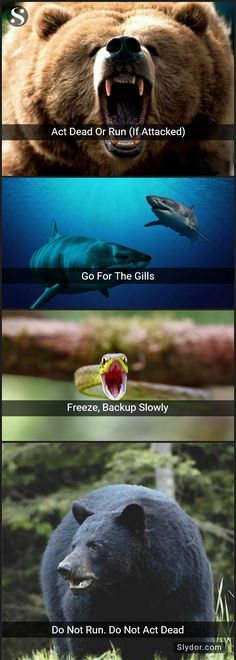 Lifesaving Combat Tips To Survive Wild Animal Attacks life hacks Survival Life Hacks, Survival Tips, Survival Skills, Survival Quotes, Wilderness Survival, Survival Gadgets, Camping Survival, Outdoor Survival, Survival Knife