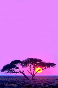 Pink sunset in Africa. BelAfrique your personal travel planner - www.BelAfrique.com
