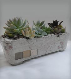 Twins Garden Standing Square Cement Planter with Succulents