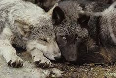 Let sleeping wolves lay