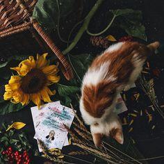 294 отметок «Нравится», 19 комментариев — About books • @alena.yurevna (@thebooks.fromsiberia) в Instagram: «Ну, я же говорила вам, что не могу продумывать заранее: каким точно выйдет фото. Вот вам и пример.…»