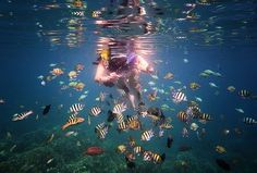 Residents of Lovina Reef ... Photo by Jensen Chua — National Geographic Your Shot