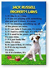 Dog Breeds – Golden Retriever – Boy Dog Names