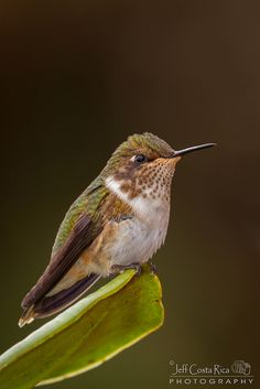 hummingbirds | Tumblr