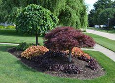 42 Stunning Evergreen Landscape Ideas For Front Yard Garden