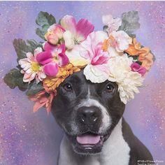 Dog, flowers