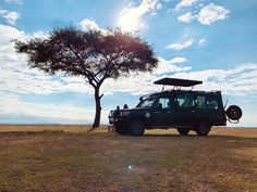 Experience wildlife while interacting and observing them of how they contributed in maintaining balance in our ecosystem. Timon And Pumbaa, Kenya Africa, Dark Night, Business Travel, Safari, Wildlife, Scene, Tours, Timon & Pumbaa
