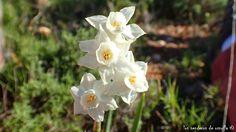 Flor en el Benicadell