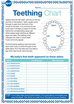 Monitor when baby's teeth appear. would be good to give to pregnant moms that come in or new moms that come in for cleanings. Teeth Eruption Chart, Baby Teething Chart, Kids Health, Baby Health, Baby Book Pages, Tooth Chart, Baby Growth, Baby Memories, Baby Kids