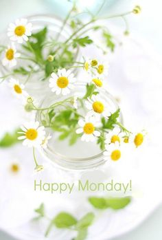 Have A Blessed Monday, Happy Monday, Hello Monday, Good Morning Good Night, Morning Wish, Monday Morning, Monday Greetings, Sunflowers And Daisies, Daisy Love