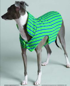 various dog coats/sweaters to sew or knit or make in other ways