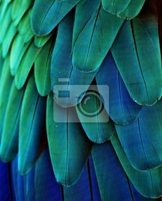 """Canvas or Poster """"parrot, macro, bird - macaw feathers (blue/green)"""" ✓ Easy Installation ✓ 365 Day Money Back Guarantee ✓ Browse other patterns from this collection!"""