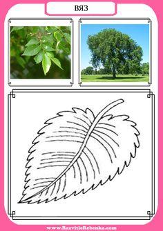 Autumn Activities For Kids, Math For Kids, Montessori Materials, Early Education, Reggio Emilia, Fine Motor, Plant Leaves, Kindergarten, Photo Wall