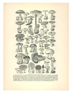 Mushrooms and Toadstools Illustration by HangWithUsToday on Etsy,
