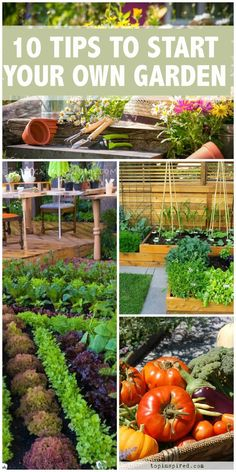 Top 10 tip for starting your own vegetable garden!