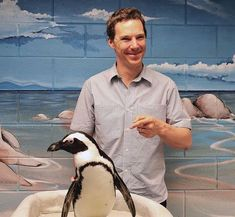 Oh. My. Gosh. It's BENEDICT CUMBERBATCH SMILING BECAUSE OF A PENGUIN!!!!!!!!