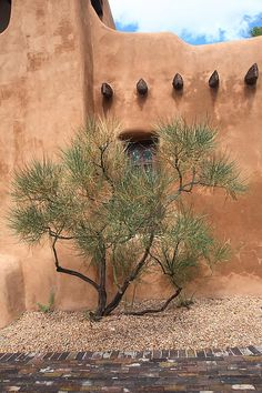 Santa Fe, New Mexico - Adobe Building and Tree