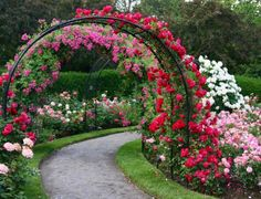 Garden arches <3 pink and reds over the path