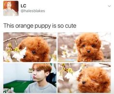 I like the one in the 3rd frame! He is the cutest pup i have ever seen!