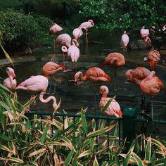 i need few flamingos in my life, not #prada bags 💅🏽💅🏽💅🏽 #berlin