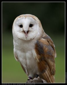 Barn Owl. This was my nickname in Jr. High. I still don't know why!
