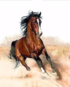 arabian horse photos and fun facts All The Pretty Horses, Beautiful Horses, Animals Beautiful, Beautiful Things, Beautiful Pictures, Horse Photos, Horse Pictures, Wall Pictures, Running Horses