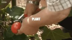 GIPHY is how you search, share, discover, and create GIFs. Free Plants, Propagation, Trees, Tree Structure, Wood