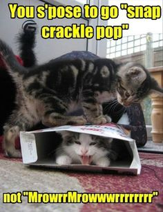 "You s'pose to go ""snap crackle pop"" - LOLcats is the best place to find and submit funny cat memes and other silly cat materials to share with the world. We find the funny cats that make you LOL so that you don't have to. Funny Cat Photos, Funny Animal Pictures, Funny Animals, Wild Animals, Animal Pics, Meme Pics, Cute Animals With Funny Captions, Animal Captions, Dog Pictures"