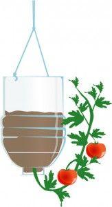 Cómo crecer tomates al revés - Ideal para espacios reducidos. - Vida Lúcida