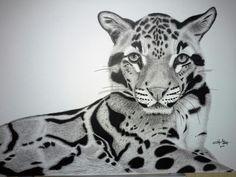 Pen and ink Clouded Leopard.  Yvonnemayartist.co.uk