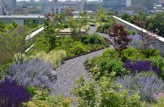 Rooftop Terrace Ideas For Your Home And Remodel Green Wise Headquarters Roof. Rooftop Terrace Ideas For Your Home And Remodel Green Wise Headquarters Roof Garden Sites throu Green Terrace, Rooftop Terrace, Rooftop Gardens, Garden Site, Easy Garden, Garden Ideas, Landscape Design, Garden Design, Green Roof System