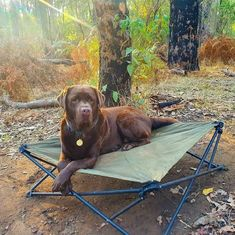 Just livin' my best camping life 🤪🌞🐾⚡ 📷@troopytrails Get yours now by clicking the link above! #theoutdoorconnection #campingaustralia #exploreaustralia #weareexplorers #offroad #4x4 #campinggoals #camperlifestyle #campingadventures #stargazing #tent #campsite #campingwithdogs #tentdiaries #australian_vacations #beautifuldestinations #seeaustralia #explore #adventures #beautiful_world #travel #solotraveller #travelphotography #traveller #wander #offthebeatentrack #dogsofinstagram