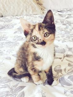 28 Of The Most Ridiculously Cute Kittens Of 2016 Tap the link Now - All Things Cats! - Treat Yourself and Your CAT! Stand Out in a Crowded World!