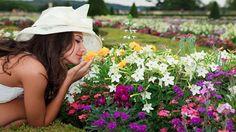 Naturetica | Gli Oli Essenziali indispensabili per l'estate