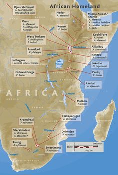 Location of early human fossil sites in Africa. Biological Anthropology, Forensic Anthropology, Earth Science, Science And Nature, Human Fossils, Early Humans, Human Evolution, Africa Map, Ancient Civilizations