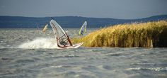 Surfen am Neusiedler See Let's Have Fun, Golden Gate Bridge, Austria, Rust, Sport, Tv, Travel, Sailing, Swimming